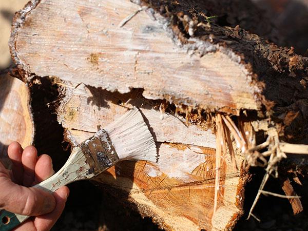 strange froots bois issu d'élagage saisonnier arbousier murier et thuya