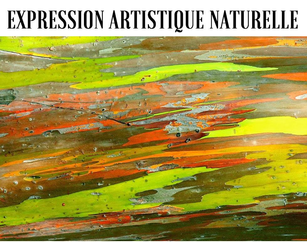 strange froots - L'écorce des eucalyptus - expression artistique naturelle