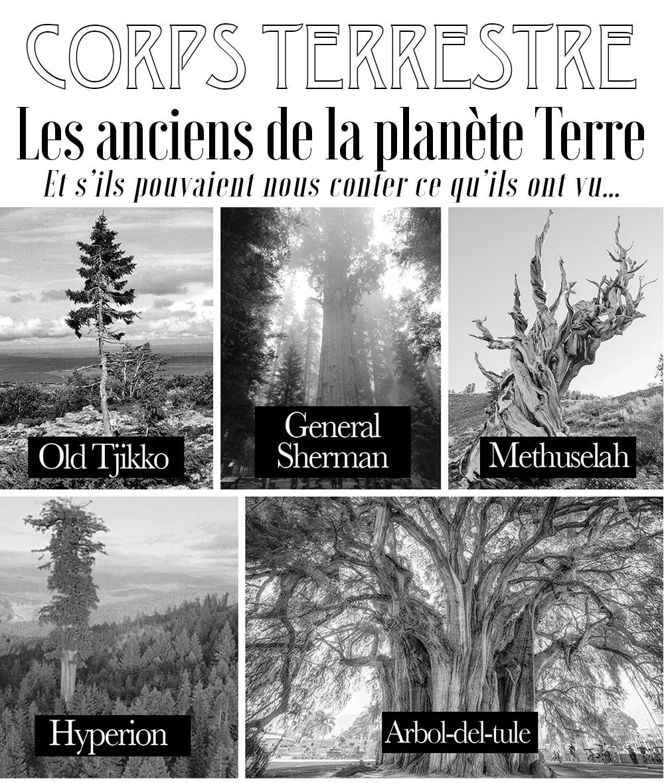 CORPS TERRESTRE - Les arbres les plus anciens de la planete terre